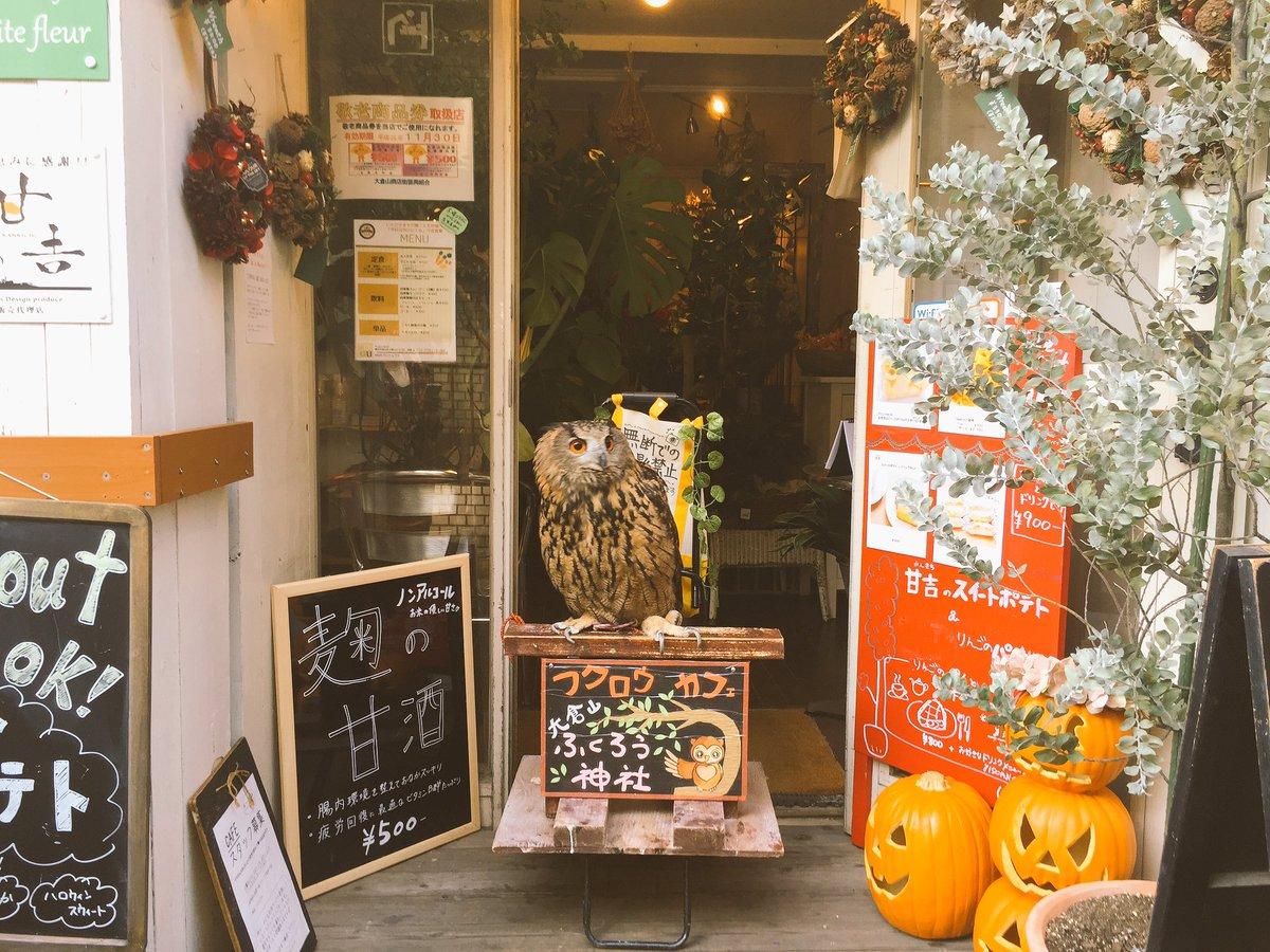 ふくろうカフェ「大倉山ふくろう神社」