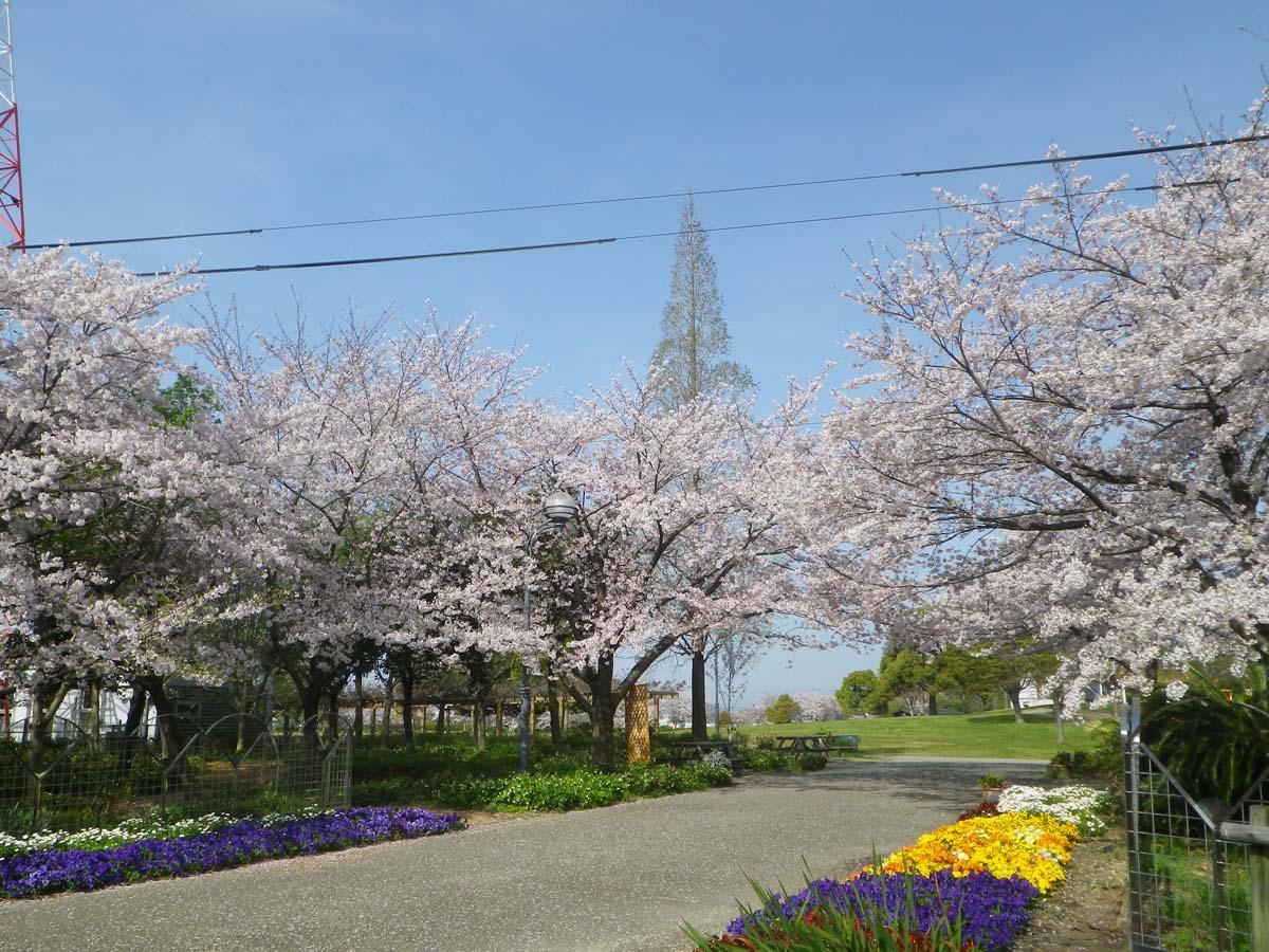 農業文化園、戸田川緑地桜