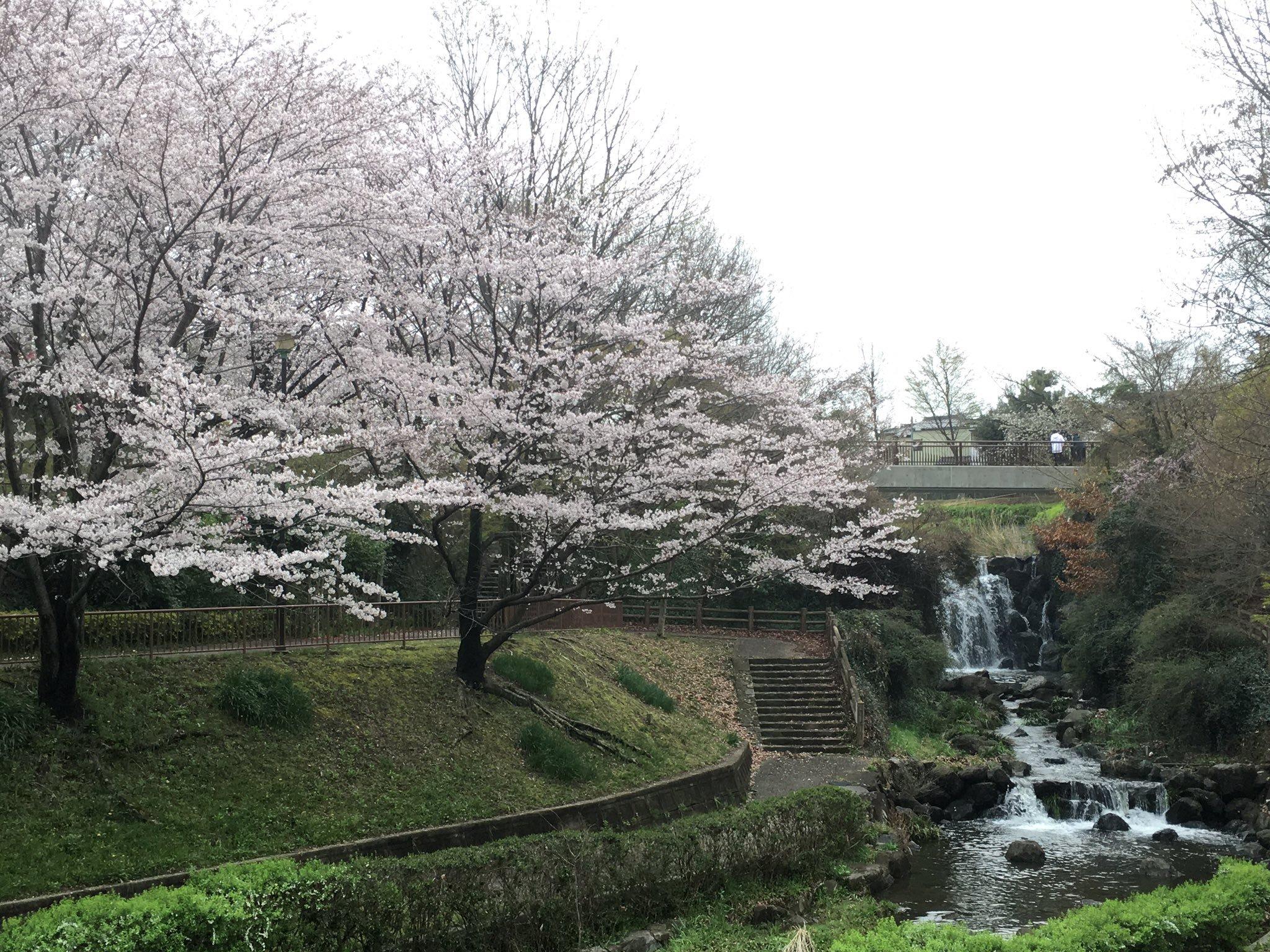城土公園桜19