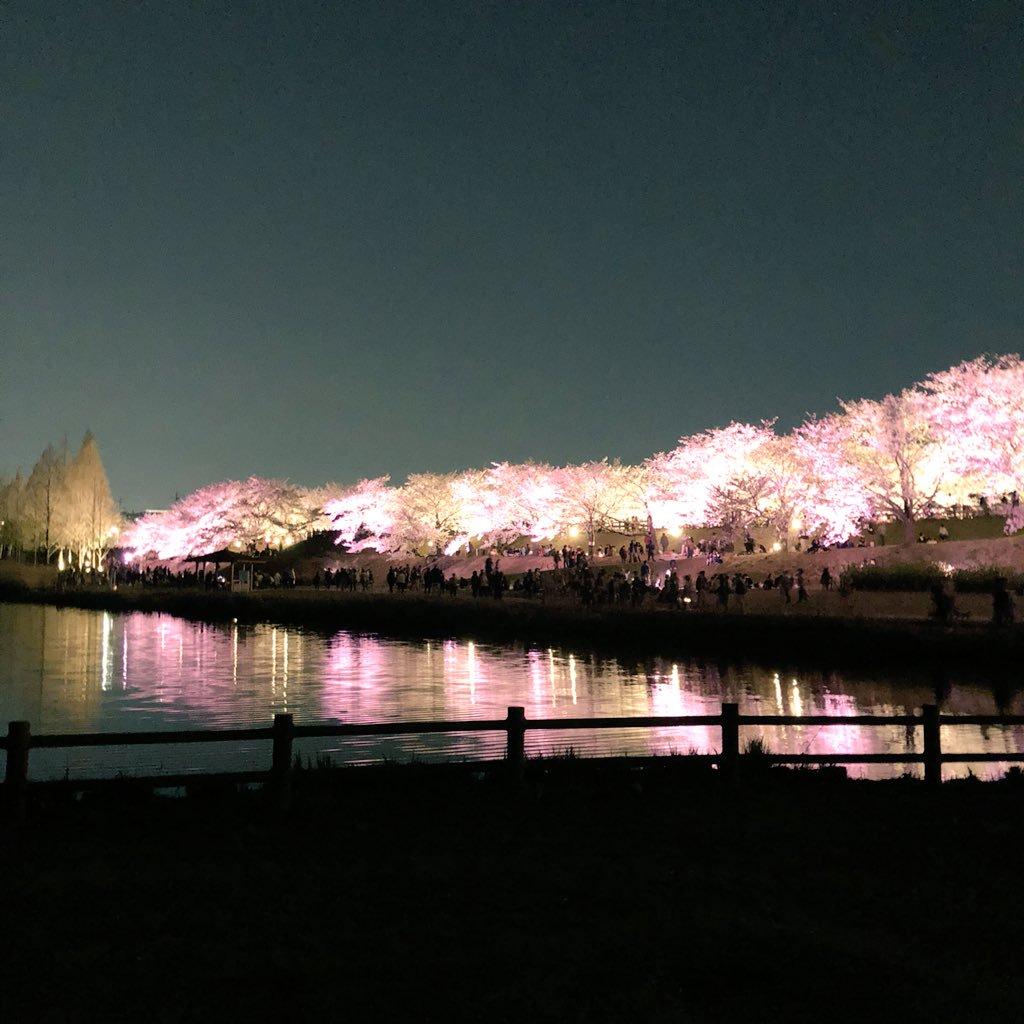 打上川治水緑地桜29