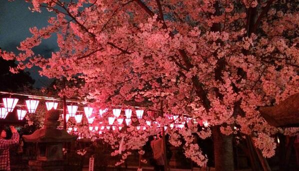 土佐稲荷神社桜35