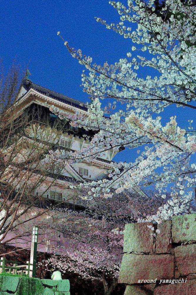 小倉城、勝山公園さくら02