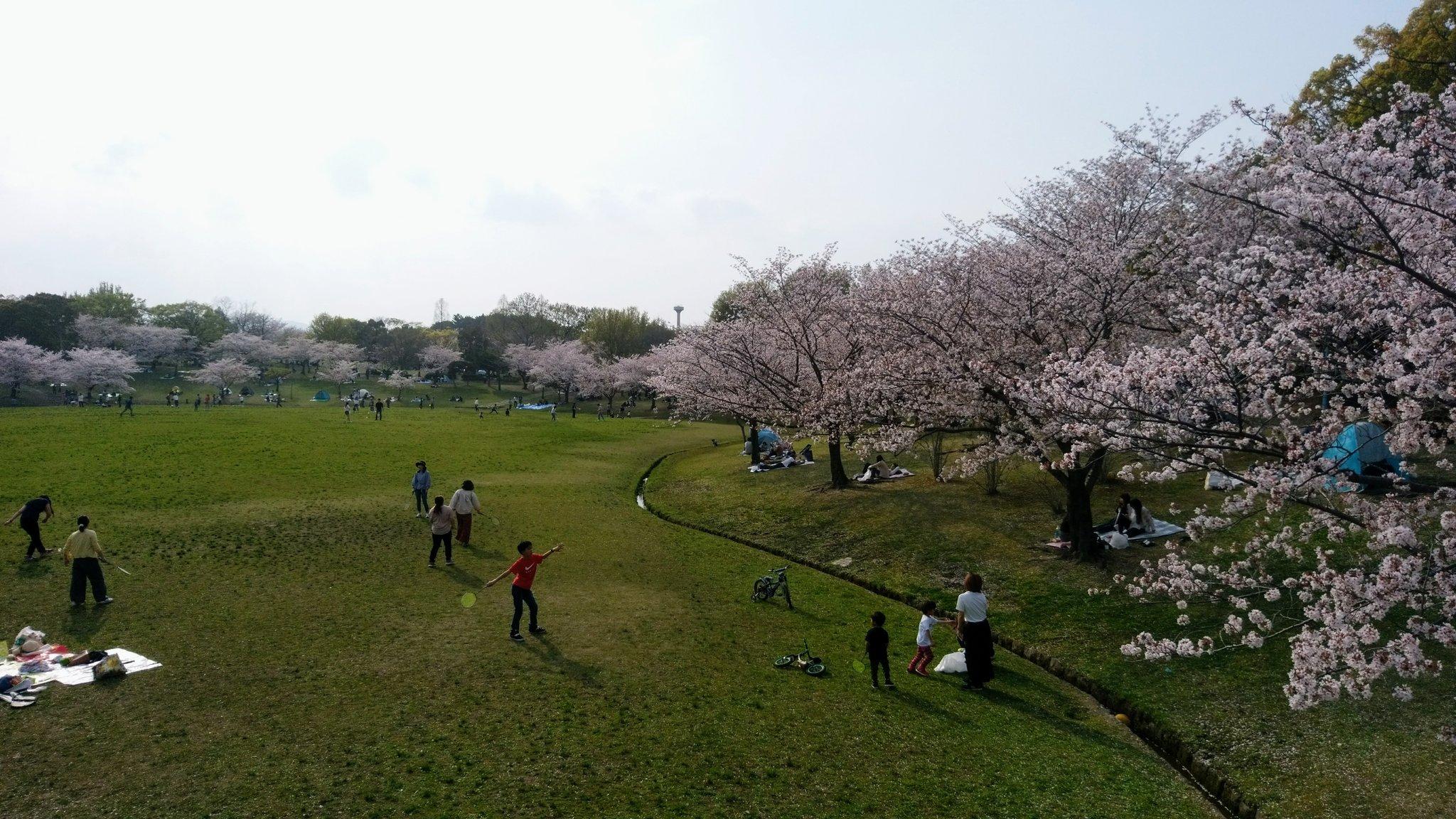 春日公園さくら28