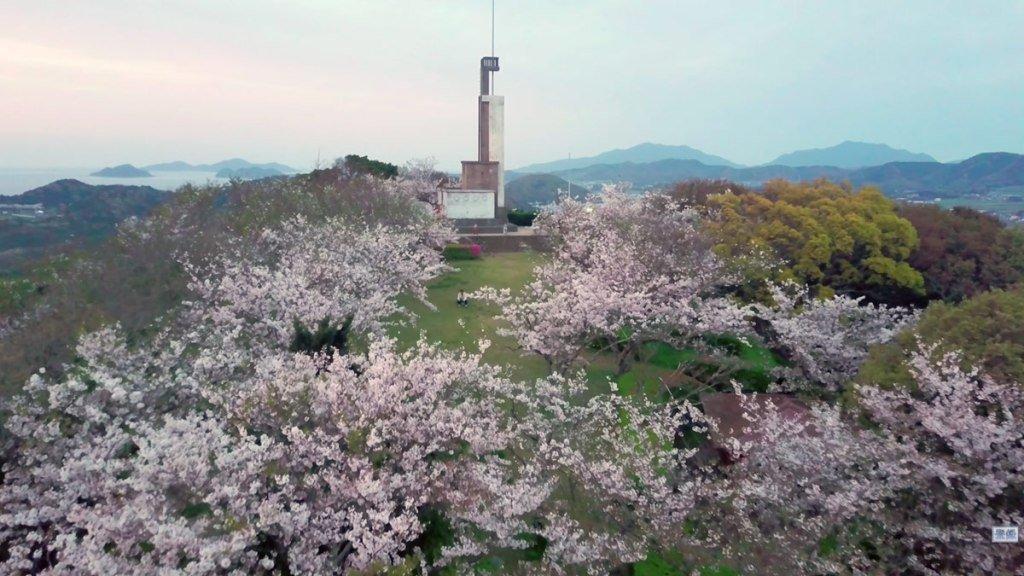 大峰山自然公園さくら33