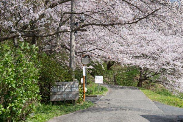 笹山公園さくら38