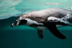 penguin-2203693_1920